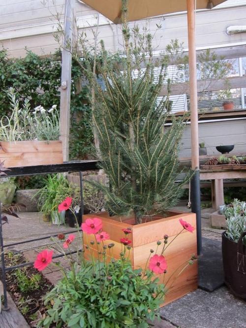 gardenmarket2015 (4)