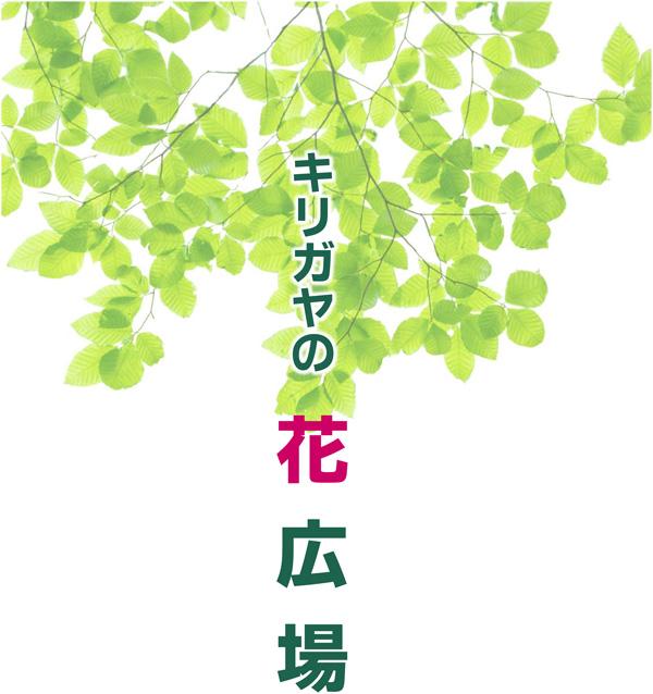 Microsoft PowerPoint - キリガヤの花広場_20170422-23.pptx